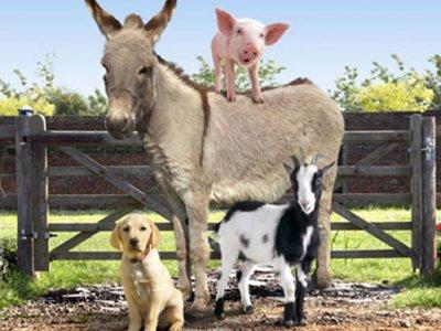 Dessins Animés : La Ferme du Bonheur (Big Barn Farm)